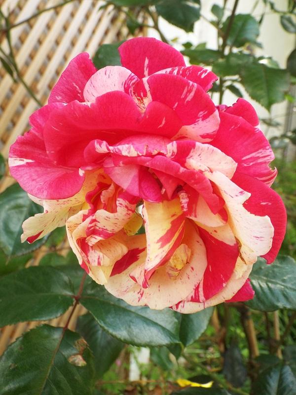 Flower Glory by bobstafford