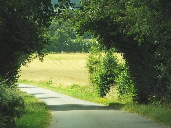 Pathway by bobstafford