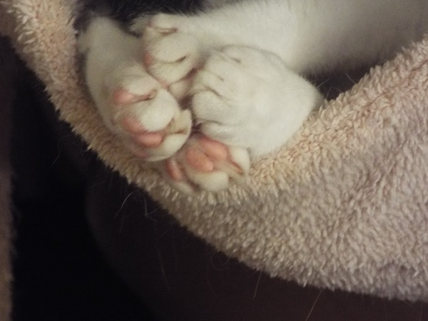 Some cat paws. Aww.