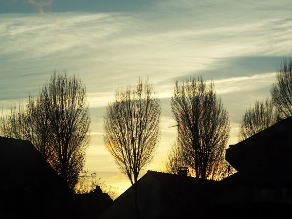 Silhouetted  Trees by bobstafford
