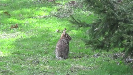 Rabbit by Dmitri Gheorgheni