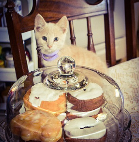 Twinky the kitten eyeing the baked goods.