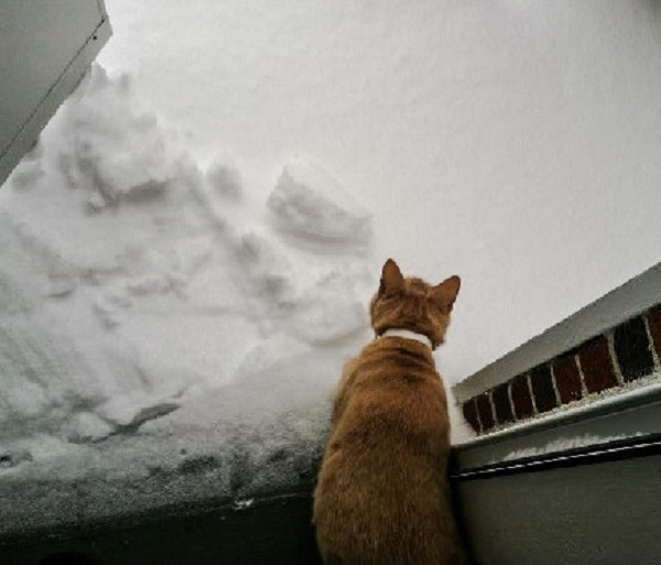 A cat deciding whether to go out in the snow.