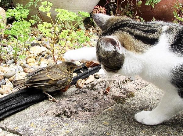 Jax the Cat inspecting a new bird.