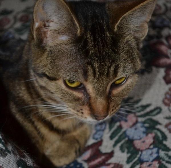 Cat sitting on a needlepoint sofa cushion