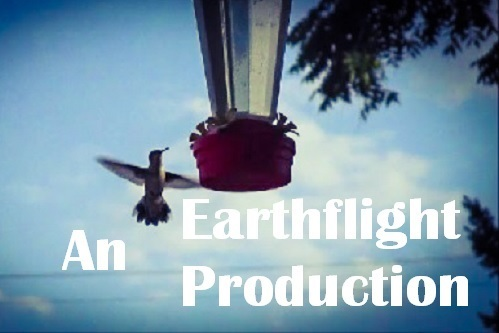 Earthflight Productions by Dmitri Gheorgheni.