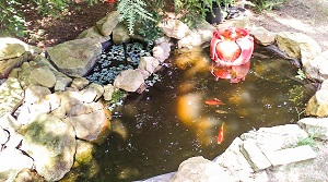 Fish in a pond.