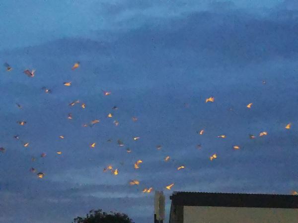 Flock of Thug Seagulls by Freewayriding