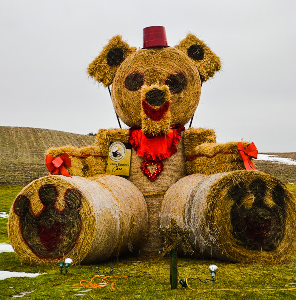 Enormous teddy bear in field.