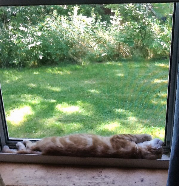 Gus the Cat stretches out in the window to catch a breeze.