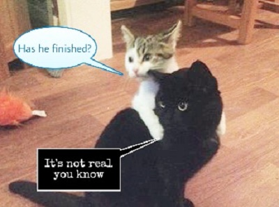 Kittehs terrified of the Edited Guide.
