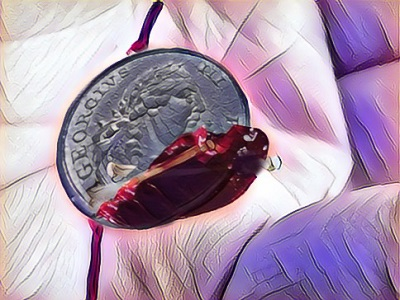 A coin covered with blood
