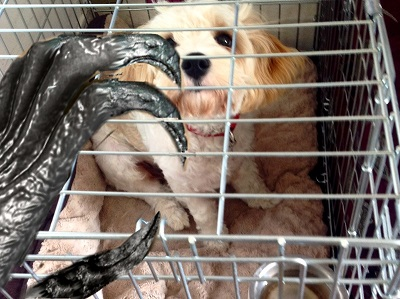 A dog in a cage, threatened with being eaten by a ghoul. Don't worry, the dog is only acting.