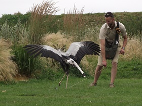 Secretary Bird crushing serpents.