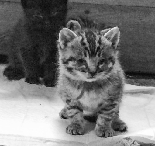 Kitten by Dmitri Gheorgheni