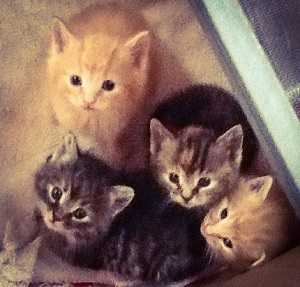 Kittens, all looking in the same direction for once.