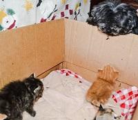 Lola talking to some kittens.