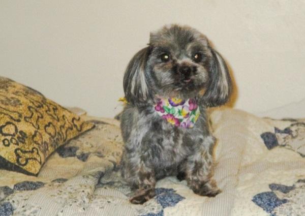 Lola's new haircut, by DG.