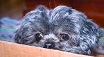 Lola peeking.