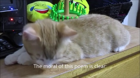 TJ the Kitty reviewing a poem