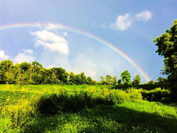 Mrs Hoggett's rainbow
