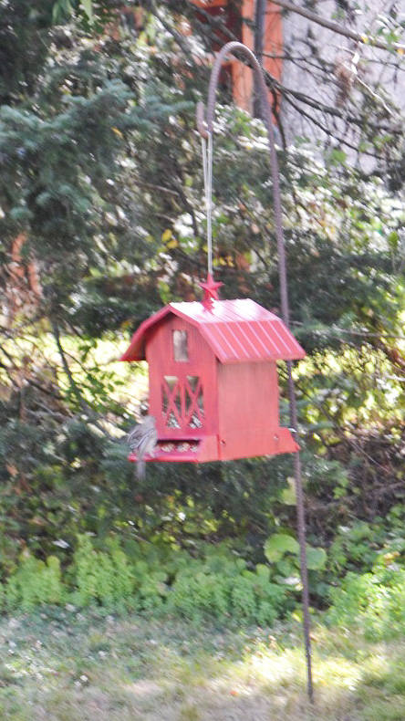 The new bird feeder. The squirrel ate the other one.