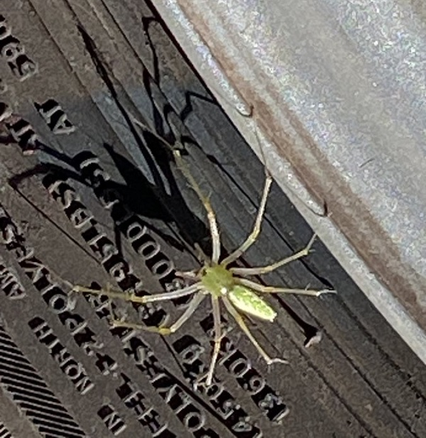 Spider on a Sundial by pattipdx