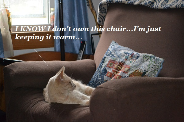 Cat warming up armchair.