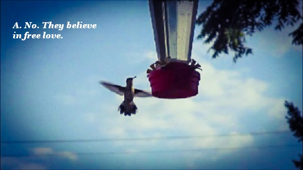 Hummingbirds don't mate. They believe in free love.