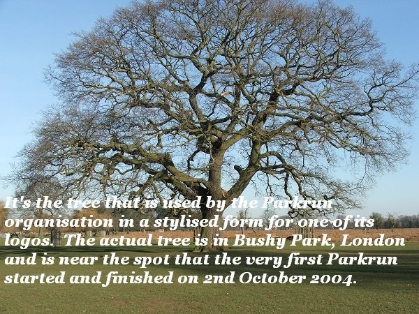 This tree marks the first Parkrun site.