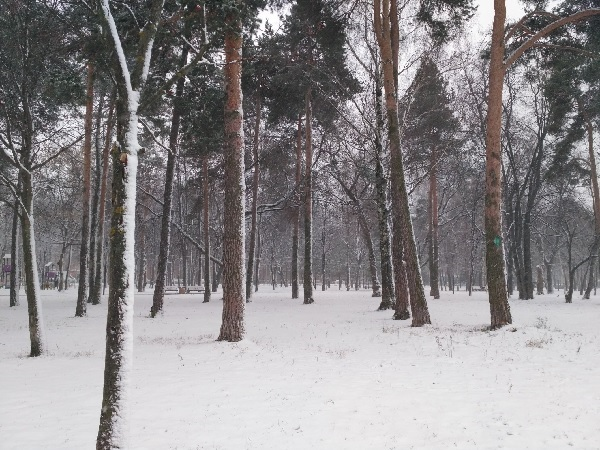 Trees in Snow by Solnushka