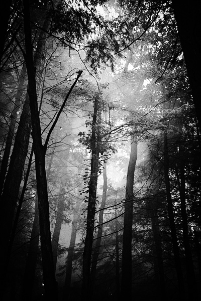 A spooky forest.