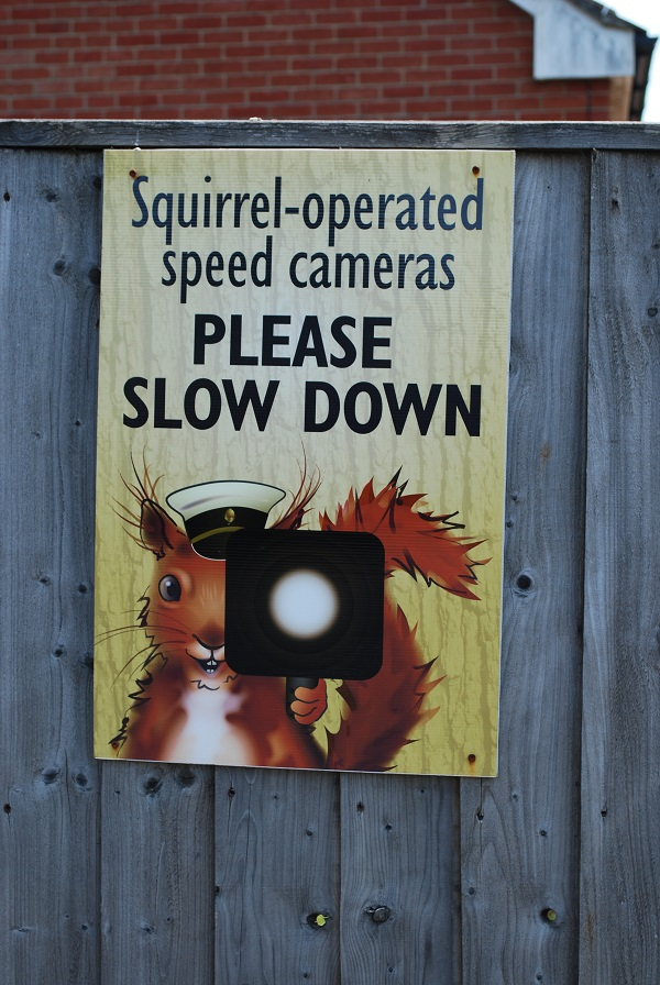 Squirrel-operated speed cameras.
