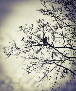 Squirrel silhouetted in a winter tree.