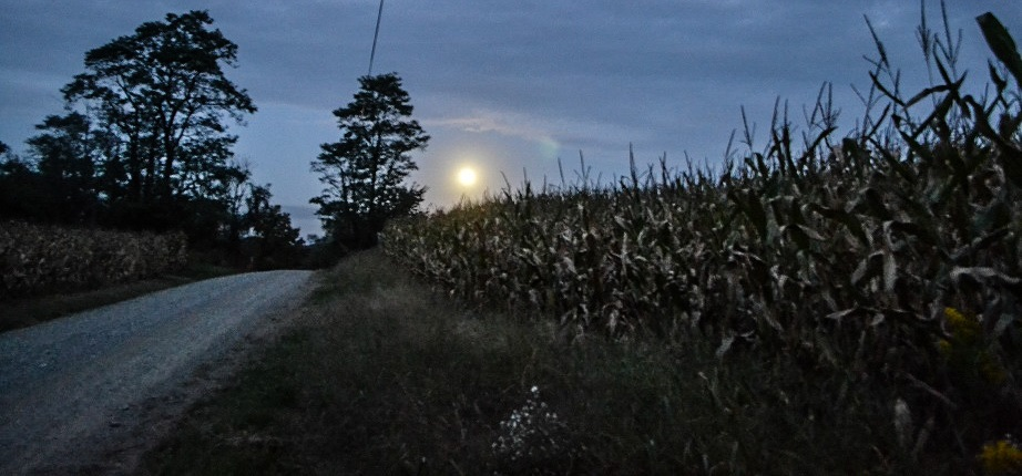 The supermoon over a cornfield.