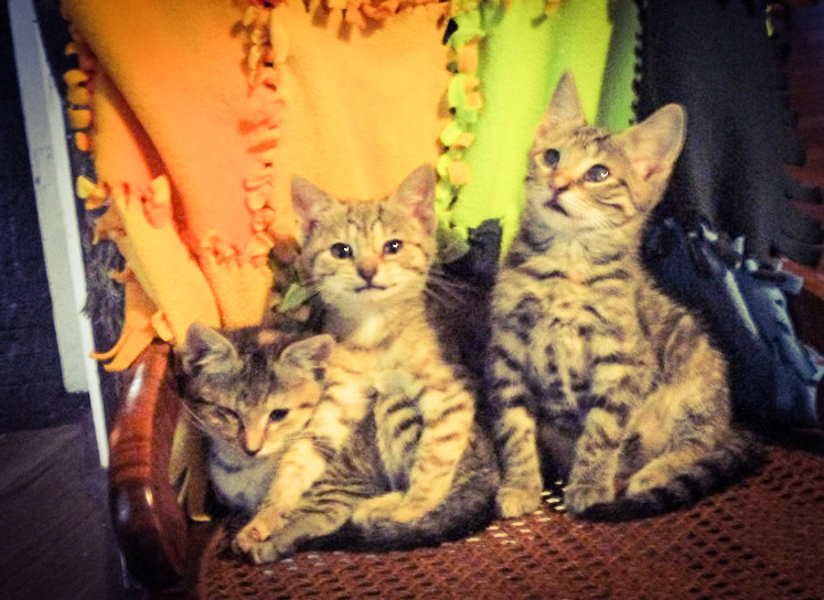 Three Little Kittens Who Don't Need No Mittens by Mrs Hoggett.