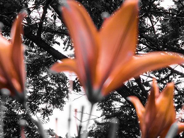 Uncanny Lilies by Dmitri Gheorgheni