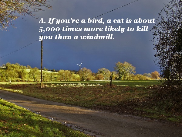 Cats are about 5,000 times more likely to kill a bird than a wind turbine is.
