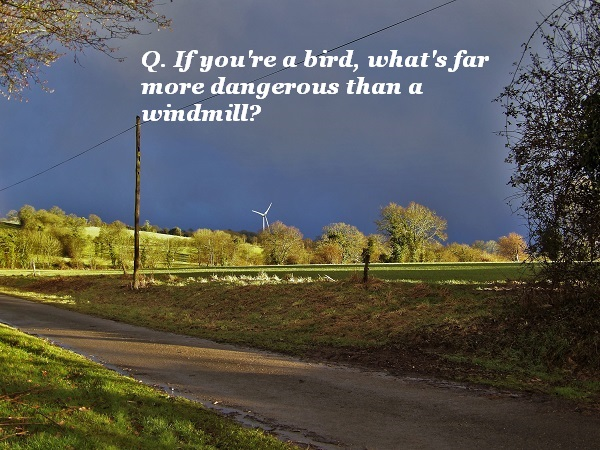 If you're a bird, what's more likely to kill you than a windmill?