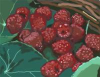 A basket of raspberries