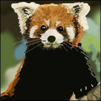 A red panda, up a tree.