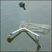 A shopping trolley in a familiar environment.