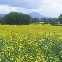 A rural scene in Shropshire