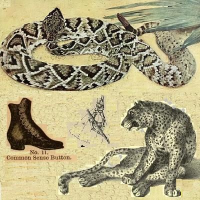 A snake, a jaguar, and a boot. Go figure. By Dmitri.