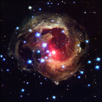 Interstellar dust and gas of 2002 nova V838 Monocerotis.