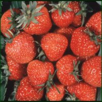 Some strawberries.