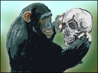 A chimp examines a human skull - would transitional fossils reveal a missing link?