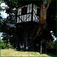A rococo-style treehouse, situated in Britain's largest broad leaf lime tree on Pitchford Estate.