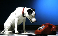 A small dog stares quizzically at a telephone.