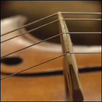 A close-up of a classical violin